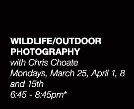 Wildlife/Outdoor Photography